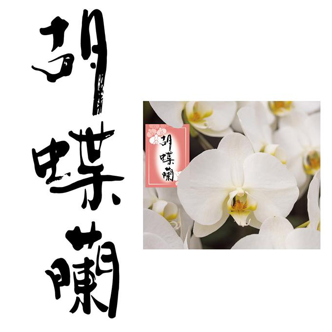 「胡蝶蘭」